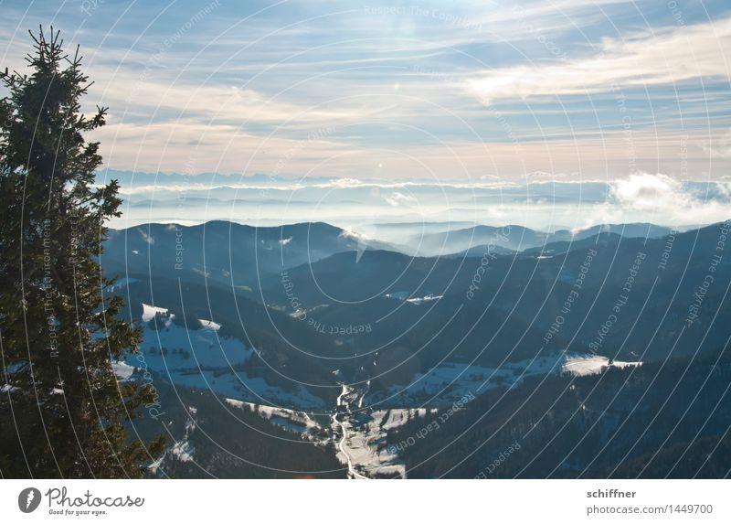 über Allem Umwelt Natur Landschaft Wolken Sonnenlicht Winter Schönes Wetter Eis Frost Schnee Pflanze Baum Wald Hügel Alpen Berge u. Gebirge Gipfel