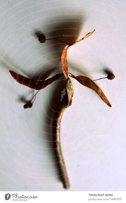 Nature Morte Kunst Kunstwerk Stillleben Blatt Blüte Lindenblüte Ast Dekoration & Verzierung Sammlung Sammlerstück Holz Zeichen Ornament Linie Windrad ästhetisch