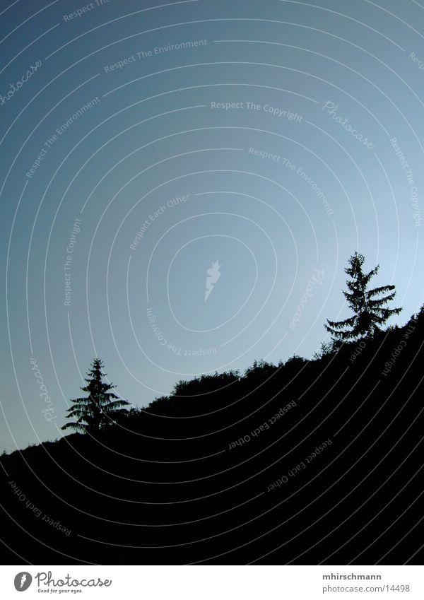 doppelwipfel Himmel Baum schwarz Wald dunkel Baumkrone