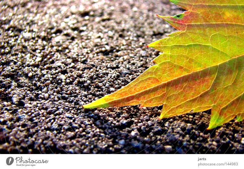autumnal Blatt Straße Farbe Herbst Wege & Pfade Herbstlaub herbstlich