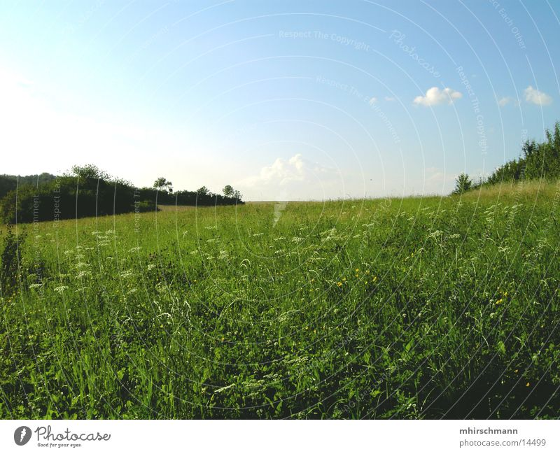 win xp Himmel Blume grün blau Wolken Wiese Berge u. Gebirge Feld Erde Sträucher