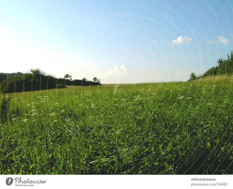win xp Wolken Wiese Feld grün Sträucher Blume Berge u. Gebirge Himmel Erde blau