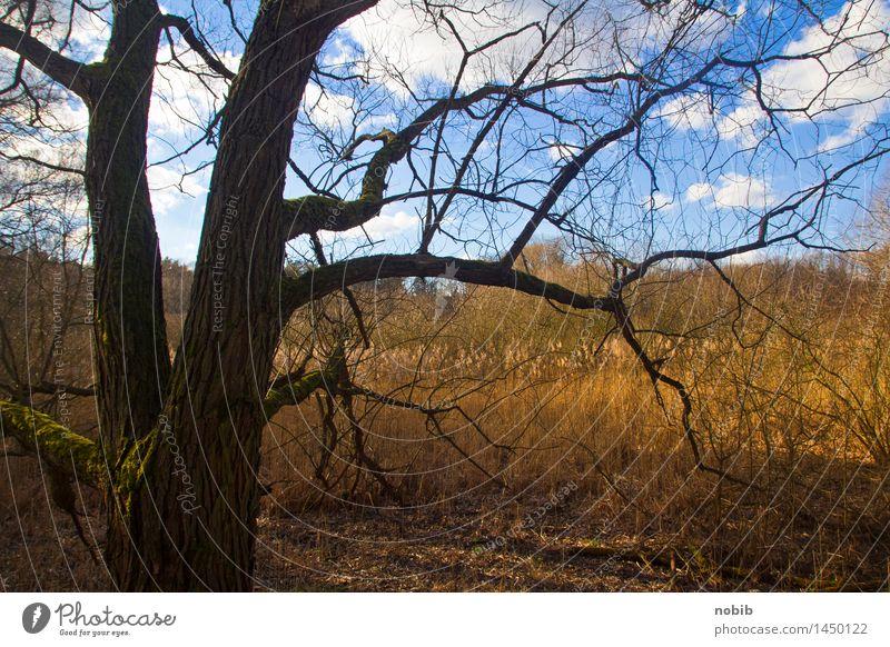 Feuchtgebiet Landschaft Erde Himmel Wolken Herbst Dürre Baum Gras Schilfrohr Wald Moor Sumpf Feuchtgebiete Holz dreckig blau braun gelb grau orange schwarz Tod