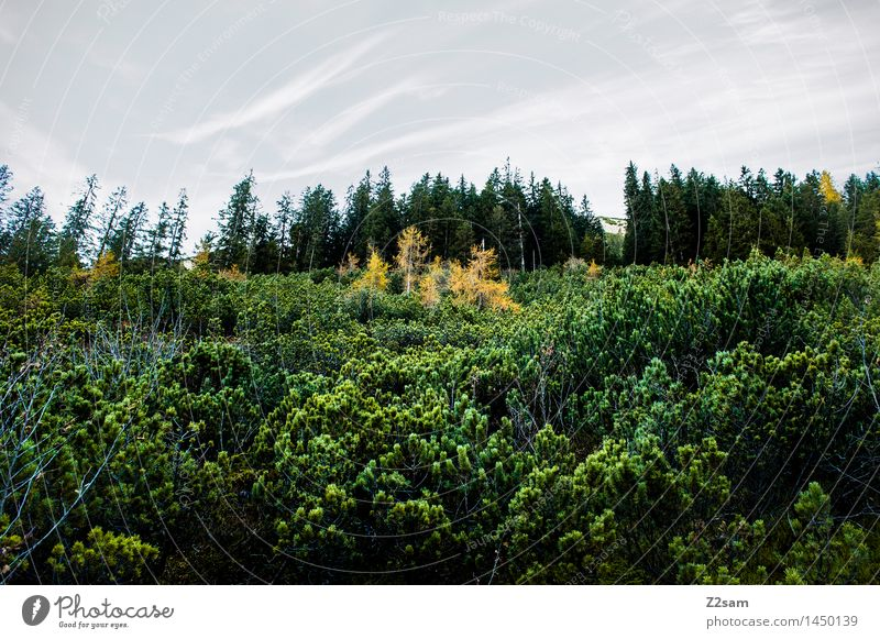 Schöne Tristesse wandern Umwelt Natur Landschaft Himmel Herbst Wetter schlechtes Wetter Baum Sträucher Alpen Berge u. Gebirge frisch gigantisch kalt nachhaltig