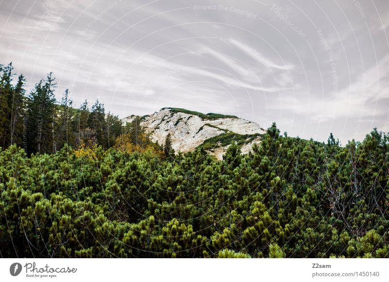 Schöne Tristesse Freizeit & Hobby wandern Natur Landschaft Herbst schlechtes Wetter Baum Sträucher Felsen Alpen Berge u. Gebirge Gipfel gigantisch kalt