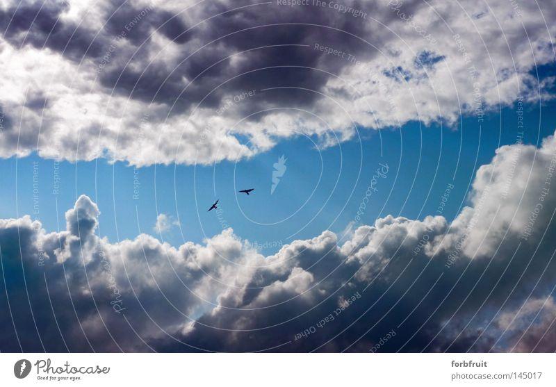 Heilige Schneise! Himmel Wolken Freiheit Stimmung Beleuchtung Vogel Wetter frei Beginn Hoffnung Sicherheit Streifen Gelassenheit Wege & Pfade Sonnenstrahlen Loch