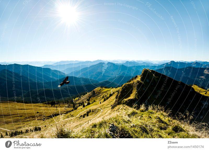 Lufthoheit Freizeit & Hobby wandern Natur Landschaft Himmel Sonne Sommer Herbst Schönes Wetter Wiese Alpen Berge u. Gebirge Gipfel Vogel fliegen frei gigantisch
