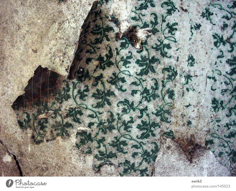 Les feuilles mortes Renovieren Tapete Blatt Mauer Wand Ornament alt historisch kaputt grün Einsamkeit Ordnung Vergangenheit Vergänglichkeit Modernisierung Rest