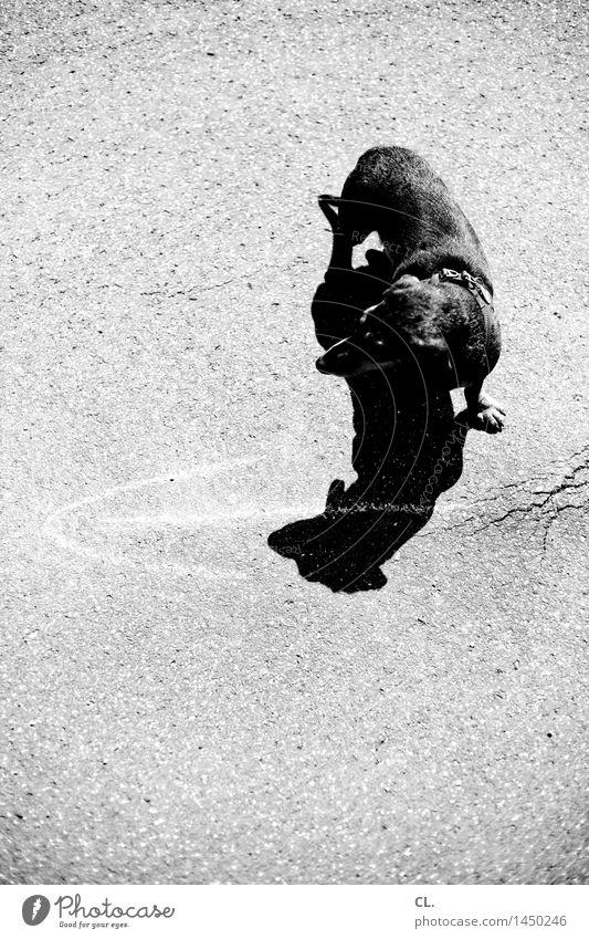 immer der nase nach Hund Tier Wege & Pfade klein Freizeit & Hobby Schilder & Markierungen Schönes Wetter niedlich Neugier Boden Ziel Pfeil Haustier Dackel