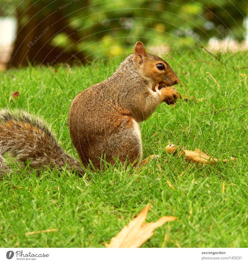 schneller nager Natur grün Farbe Freude Tier Wärme Auge Hintergrundbild grau Garten Park Ernährung niedlich süß retro weich