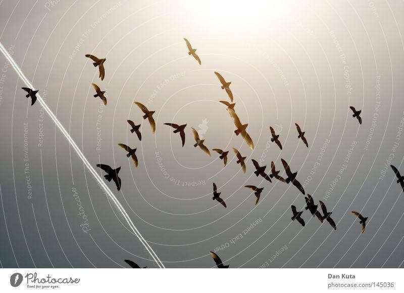Himmel – Segen oder Flug? Ferien & Urlaub & Reisen blau Wolken ruhig Freude Ferne kalt Leben Glück Freiheit fliegen Vogel Linie frei mehrere