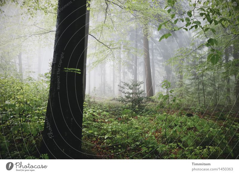 Markiert. Natur Pflanze grün Baum dunkel Wald schwarz Umwelt Herbst Gefühle natürlich grau Nebel bedrohlich Markierungslinie