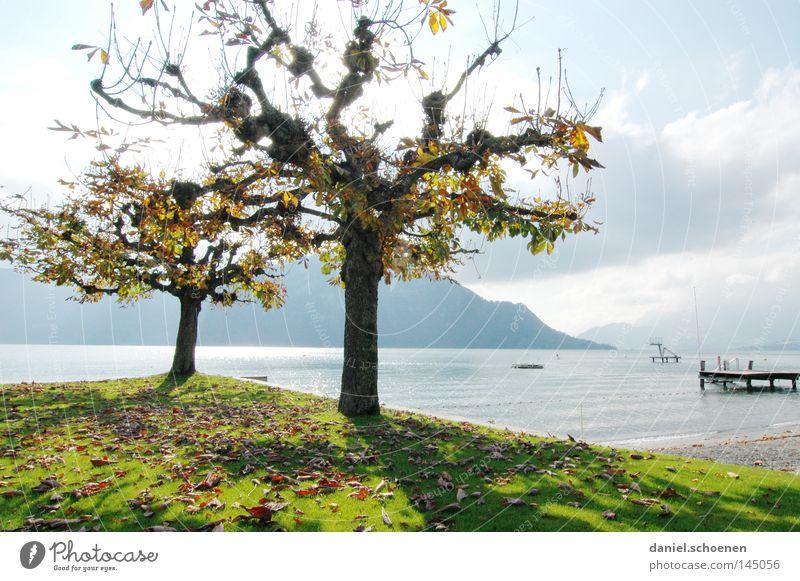 Nachsaison 1 Wasser Baum grün Blatt gelb Farbe Herbst Berge u. Gebirge See braun orange Schweiz Jahreszeiten Seeufer Baumstamm Zweige u. Äste