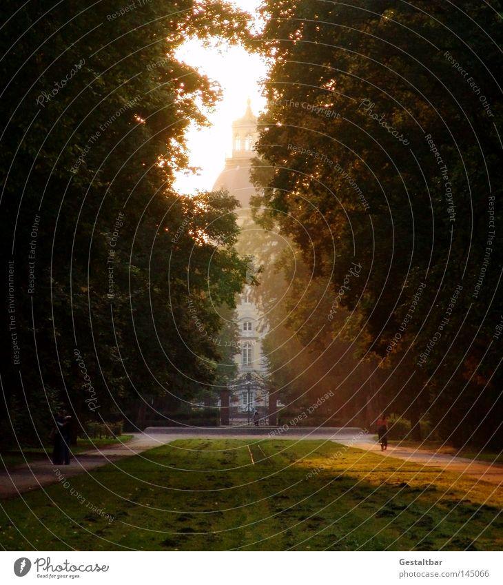 Letzter Sommerabend Sonne Wald Erholung Wiese Herbst Wärme Wege & Pfade Bewegung Traurigkeit Park laufen Turm Trauer Spaziergang Vergänglichkeit