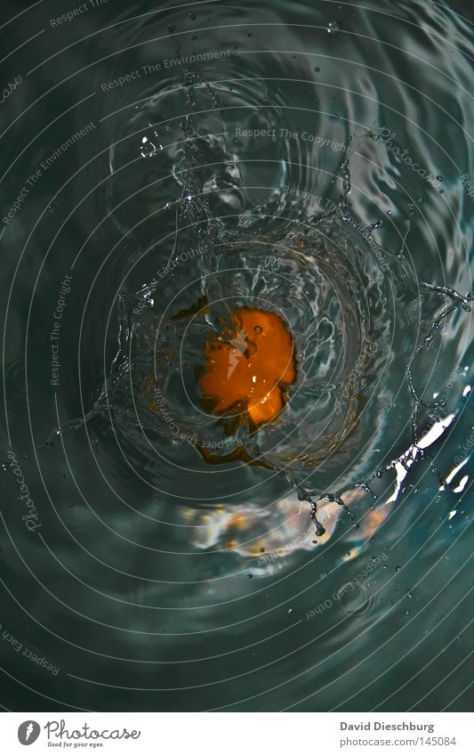 Eigelb blau Wasser Vogel liegen Wellen Lebensmittel nass Aktion Ernährung Eisenbahn Urelemente kaputt Boden Dinge Kochen & Garen & Backen