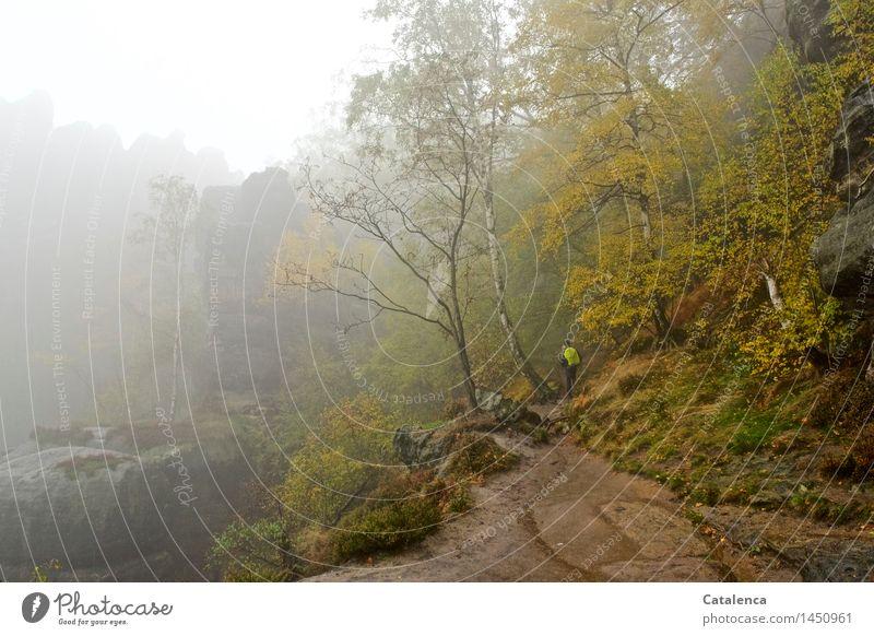 Im Nebel unterwegs Wandern Mensch 1 Natur Landschaft Pflanze Erde Wassertropfen Herbst schlechtes Wetter Regen Baum Sträucher Moos Wald Felsen Schlucht