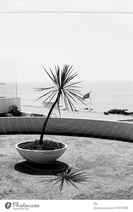 douro Natur Pflanze Sommer Umwelt Küste Wetter Platz Klima Schönes Wetter Fluss Wolkenloser Himmel Flussufer Grünpflanze