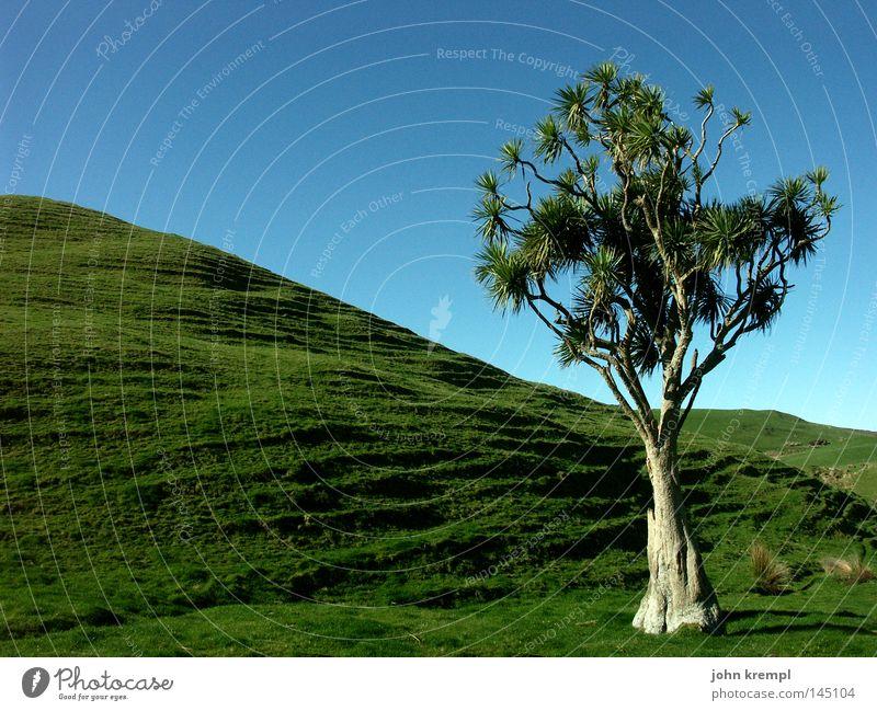 bin so baumsam Neuseeland Baum grün blau Südinsel Blatt Einsamkeit stumm Abel Tasman National Park Umhang Farewell Spit Strand Küste Berge u. Gebirge cook