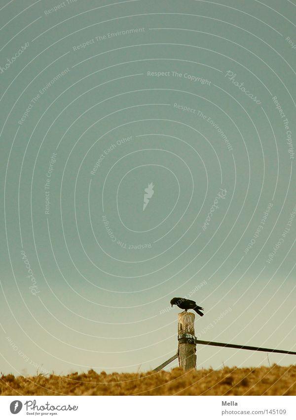 Herbst is coming Himmel Wolken Einsamkeit grau Vogel Feld sitzen Landwirtschaft Weide Zaun verloren Pfosten hocken schlechtes Wetter Rabenvögel
