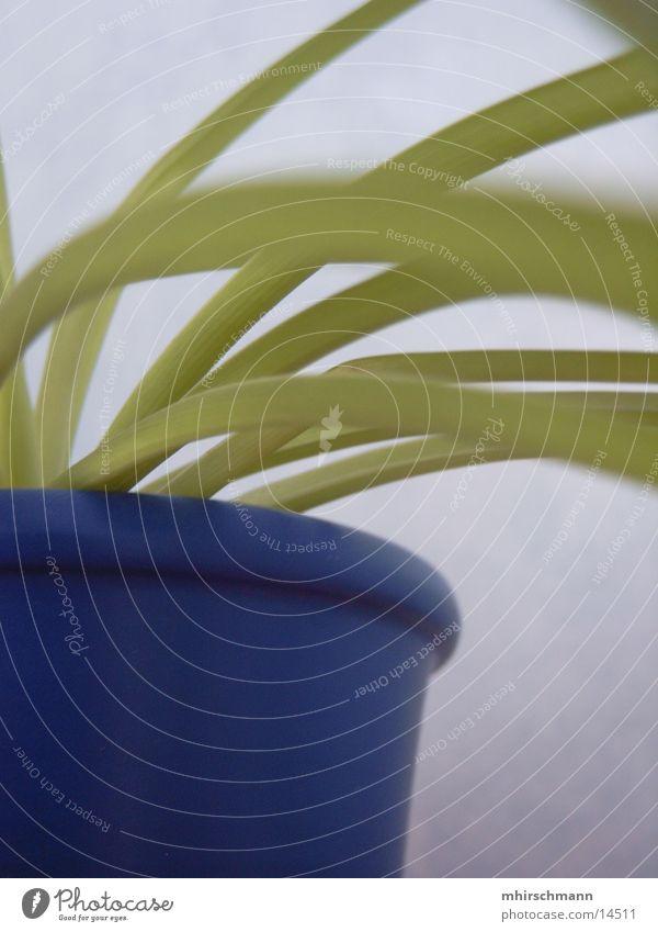pflanze Blumentopf grün Pflanze Blatt blau