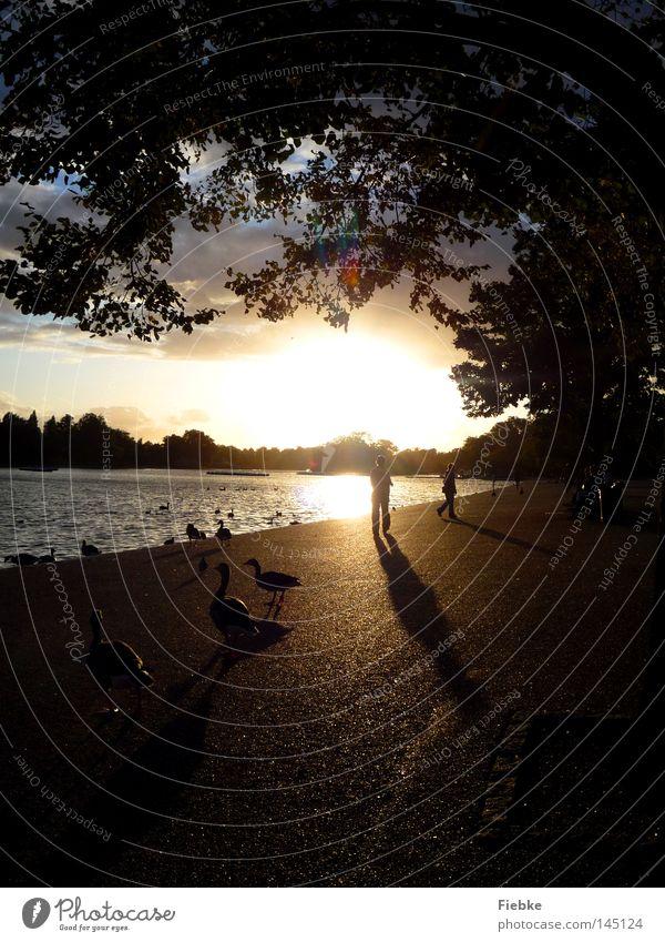 Am Ende eines Tages ... See Sonne Sonnenuntergang Himmel Wolken Wasser Wellen Promenade Park Gans Ente Vogel Schatten dunkel Licht Gold schimmern Beleuchtung