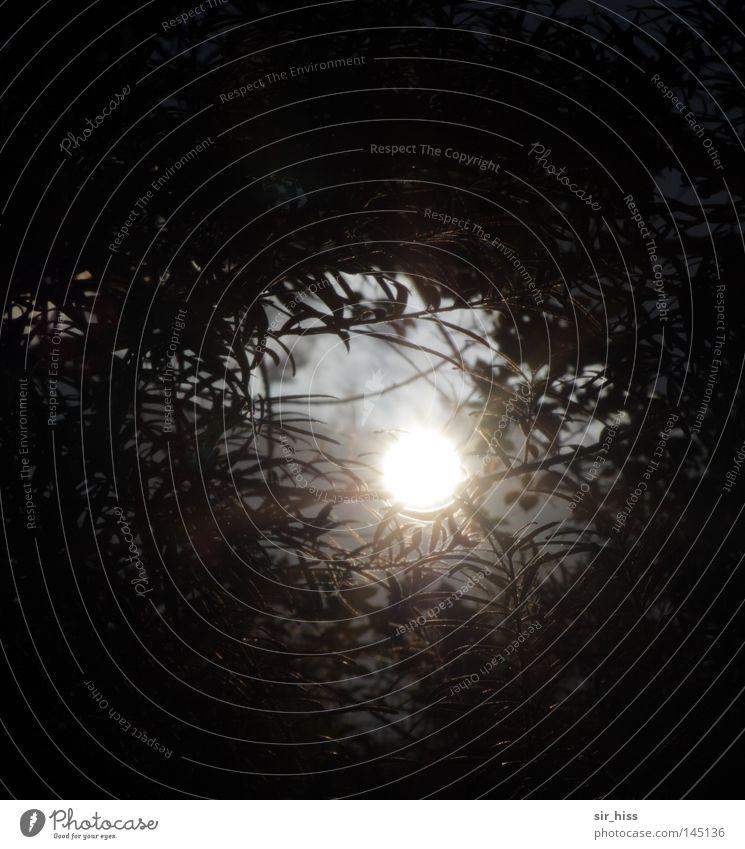 Elfenlicht Mitte Licht Beleuchtung diffus Nebel Vergänglichkeit Himmelskörper & Weltall Sonne Schatten Zweig Aurora Aura la chamandu