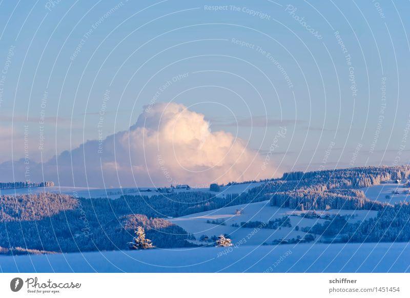 Sahnehaufen Umwelt Natur Landschaft Wolken Winter Klima Schönes Wetter Eis Frost Schnee Pflanze Baum Wald Hügel Berge u. Gebirge kalt Wolkenformation Wolkenbild