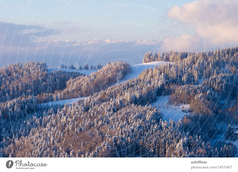 Pudergezuckert Umwelt Natur Landschaft Wolken Winter Schönes Wetter Eis Frost Schnee Wald Hügel Berge u. Gebirge Schneebedeckte Gipfel kalt Schwarzwald Berghang