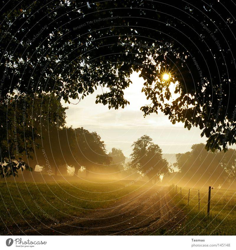 Morgennebel Baum Sonne Straße Herbst Nebel gold Zaun krabbeln Geäst Zweige u. Äste Zaunpfahl