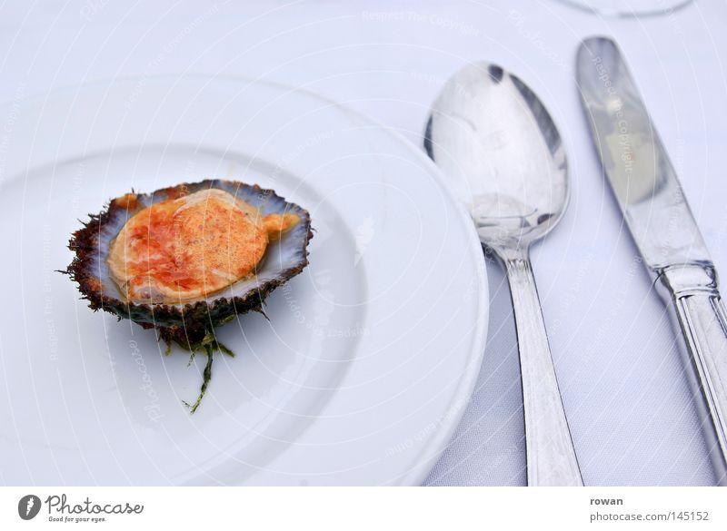 lecker muschel Farbfoto Textfreiraum oben Hintergrund neutral Fisch Meeresfrüchte Ernährung Mittagessen Abendessen Festessen Geschäftsessen Slowfood Geschirr