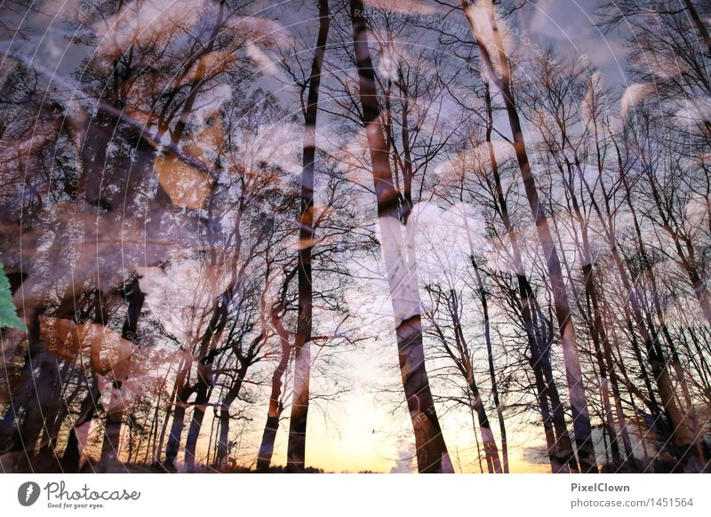 Herbst Natur Ferien & Urlaub & Reisen Pflanze schön Baum Landschaft Blatt Tier Wald Gefühle braun Park träumen wild Tourismus wandern