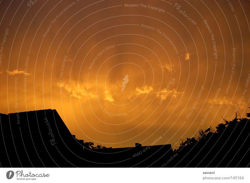 orangener Himmel Sonne Wolken Wetter Baum Dach dunkel gelb Kraft undefined glühen Beleuchtung Baumkrone Farbfoto Außenaufnahme Menschenleer Textfreiraum oben