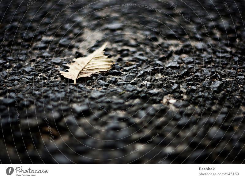 Owner Of A Lonely Blatt Einsamkeit Herbst Stein Asphalt Tiefenschärfe Mineralien