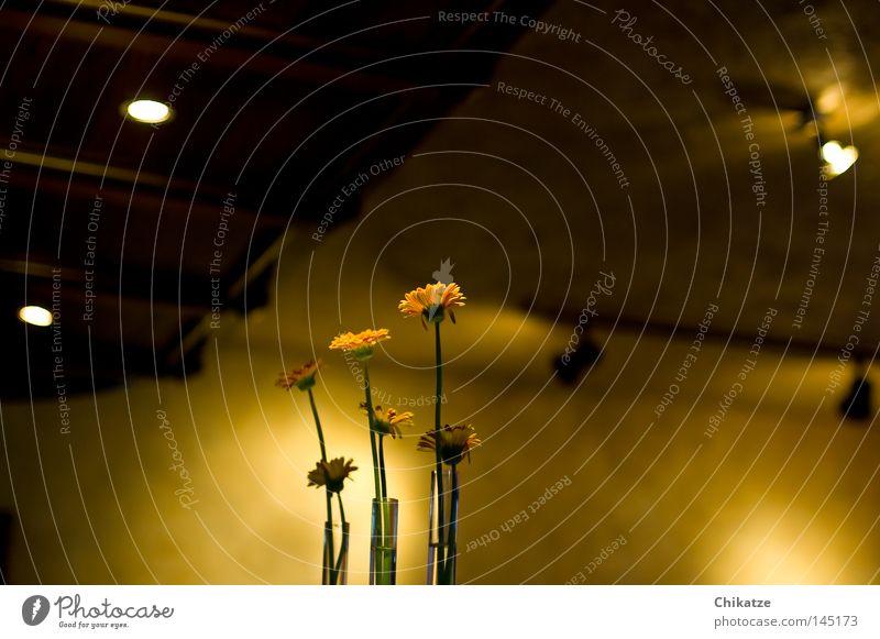 Flowers. Pflanze Blume gelb Vase Gastronomie Licht Schatten gemütlich harmonisch schön Kneipe