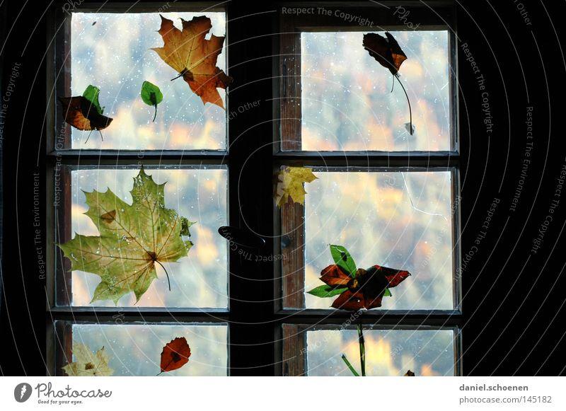Herbst Blatt Farbe Fenster Dekoration & Verzierung Häusliches Leben Jahreszeiten Wohnzimmer Fensterscheibe
