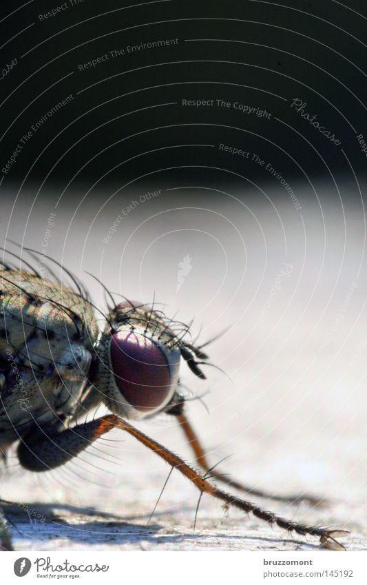 Fliege von rechts Auge Kopf Haare & Frisuren Insekt Textfreiraum Oberschenkel Facettenauge