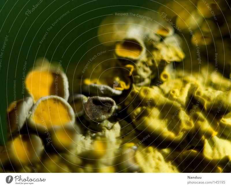 weit, weit weg Natur gelb Hintergrundbild nah obskur Außerirdischer außerirdisch Algen Flechten Flechten