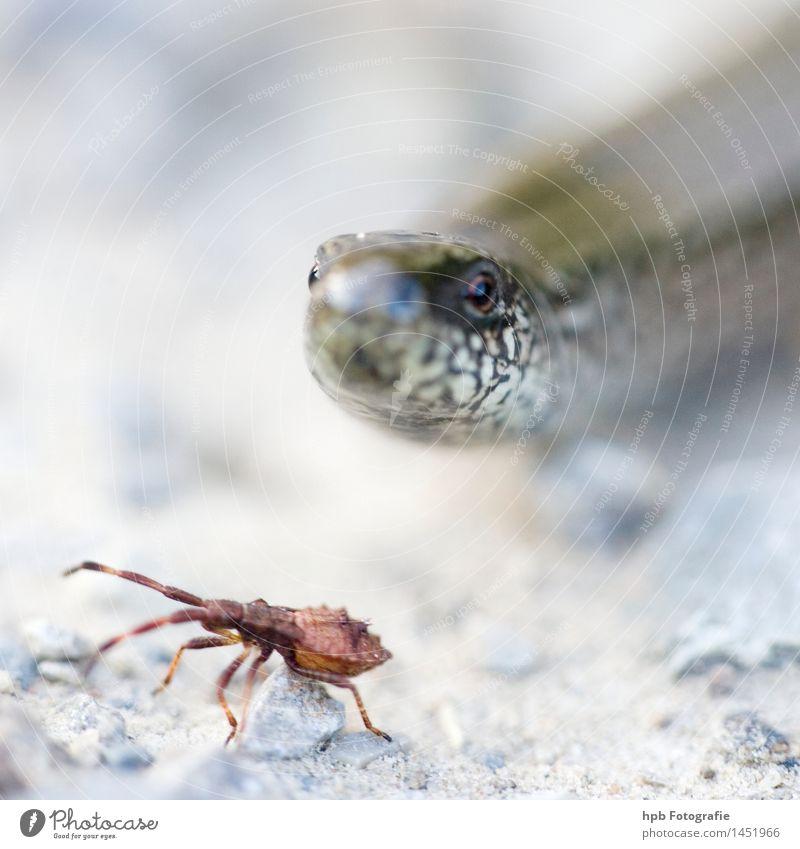Blindschleiche Natur schön weiß Tier Bewegung klein außergewöhnlich glänzend Feld Angst Wildtier Geschwindigkeit beobachten bedrohlich Todesangst dünn