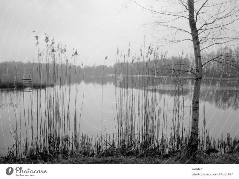 Fragille Umwelt Natur Landschaft Pflanze Wasser Himmel Wolken Horizont Schönes Wetter Baum Sträucher Wildpflanze Zweige u. Äste Birke Röhricht Seeufer Bank dünn