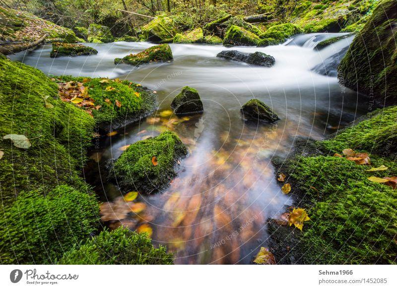 Herbstfarbenim Fluss bei langer Belichtung Umwelt Natur Landschaft Pflanze Urelemente Erde Wasser Sonne Wetter Schönes Wetter Baum Blume Gras Sträucher Moos