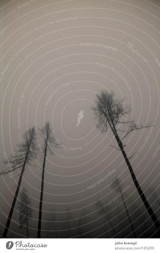 endlich herbst Baum Wald dunkel Herbst Tod Berge u. Gebirge Nebel Wind Vergänglichkeit Sturm gruselig Österreich Skelett Bundesland Steiermark Schrecken