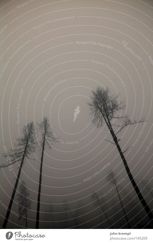 endlich herbst Herbst Baum Wald Schrecken dunkel Skelett Tod gruselig Horrorfilm Nebel Berge u. Gebirge Sturm Wind Hexe Alptraum Graz Österreich Vergänglichkeit