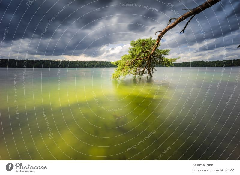 Eine Kiefer und dunkle Wolken am See mit langer Belichtung Natur Pflanze schön Sommer Wasser Baum Landschaft Umwelt Gefühle Stimmung Sand Wellen Wind Romantik