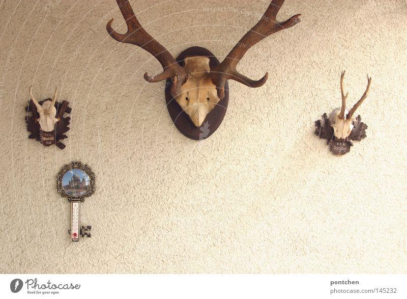 Hirschgeweihe hängen an einer Wand Freizeit & Hobby Jagd Dekoration & Verzierung Thermometer maskulin Tier Kitsch Ehre Tod Idylle Nostalgie Tradition Wert