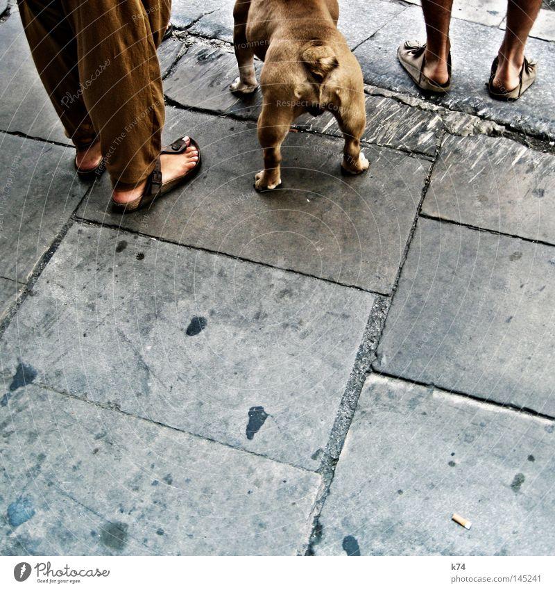 urban eco pit bull Hund Stadt Straße Fuß braun Angst Rücken warten gefährlich stehen bedrohlich Gesäß Ende Hinterteil Kontrolle ökologisch