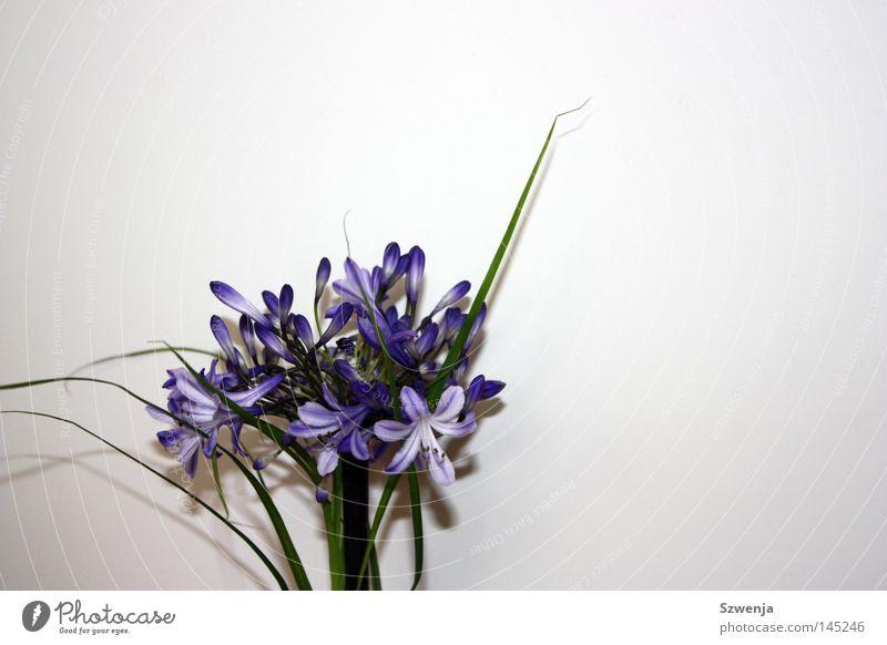 Flora Blume Wand weiß grün violett Sträucher Blüte Pflanze blau