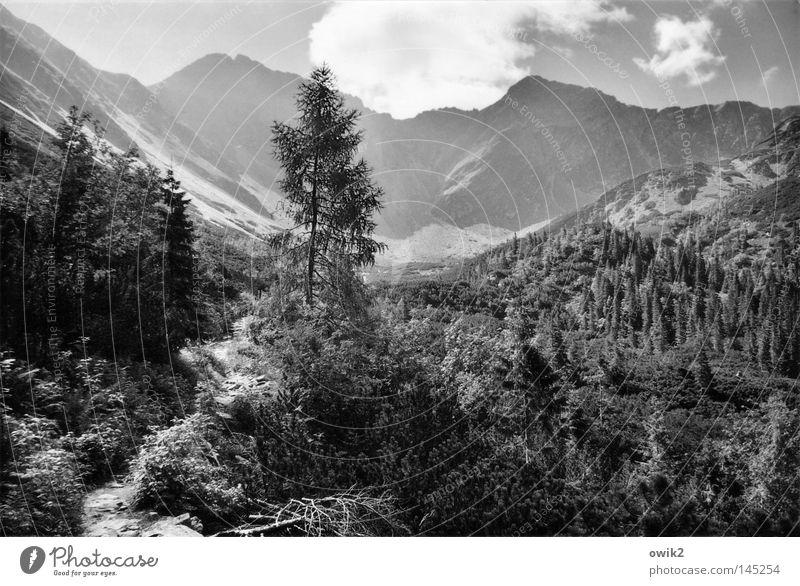 Steine und Hügel Erholung Berge u. Gebirge wandern Umwelt Natur Landschaft Pflanze Himmel Wolken Klima Schönes Wetter Baum Wald Tatra Gipfel Wege & Pfade groß