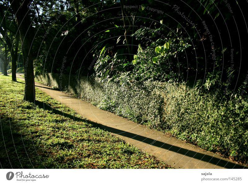 wenn die schatten länger werden grün Baum Wand Wege & Pfade Mauer Beton Boden Sträucher Rasen Asien Bürgersteig Urwald Schatten Abenddämmerung Singapore