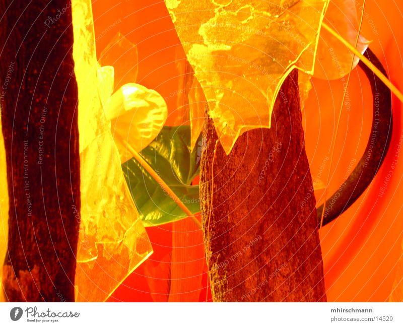 boxenpflanze grün Pflanze Blatt gelb Farbe Garten orange Statue Lautsprecher Messe Baumstamm Ausstellung Franken Nürnberg