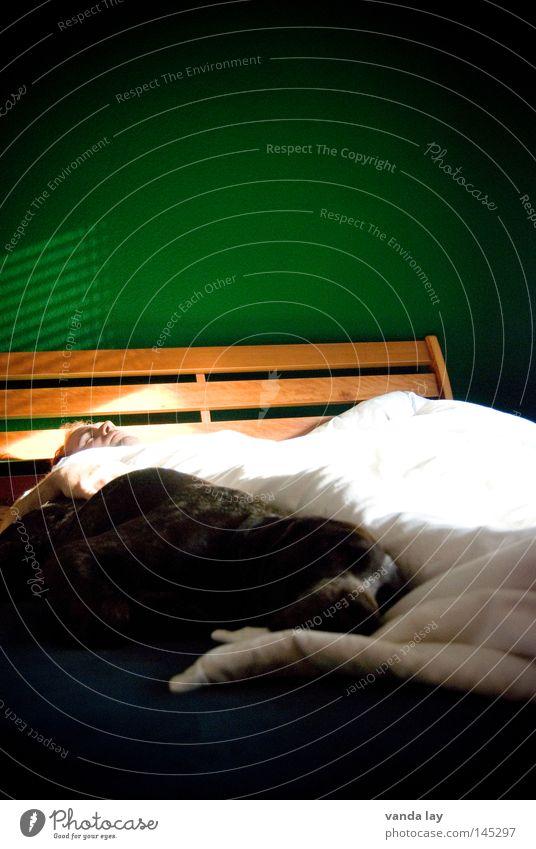 Hunde gehören nicht ins Bett! Tier Freundschaft Säugetier Mann Schlafzimmer Vertrauen unhygienisch Bettlaken Bettdecke Möbel schlafen Erholung weiß grün braun